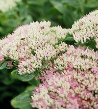 Best Plants for Landscape Edging