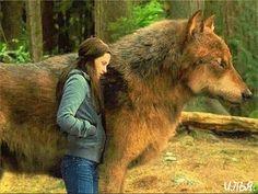 Девочка и волк - анимация на телефон №1331335