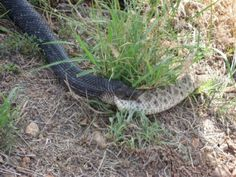 #This is Why You Don t Kill Black Snakes My father in law sends me the most random and entertaining email forwards. Sometimes they are so entertaining that I have to share them! Have you ever heard…