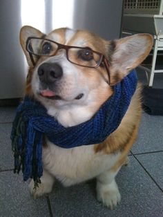 In 2010, Vogue magazine voted corgis the most stylish dog breed. With their penchant for headwear, I can see why.