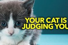 If Cats Told You What They Were Thinking