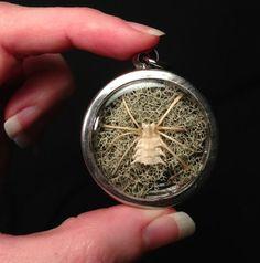 Osteo Arachnid: Bone Spider Pendant Necklace  by Bonelust on Etsy