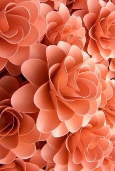 70 New Ideas Flowers Aesthetic Pastel Orange Paper pretties dresses wrappings flowers Peach Colors, Coral Color, Coral Pink, Orange Color, Coral Art, Peach Flowers, Colour, Orange Aesthetic, Aesthetic Colors