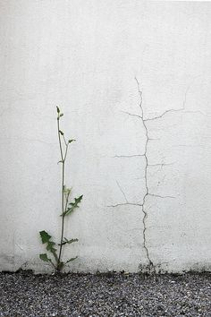 Life and decay