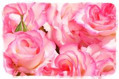 Wallpaper, Rose, Spring, Flowers, Plants, Pink, Wall Papers, Florals, Roses