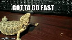 Funny pictures about Maximum Overdrive Activated. Oh, and cool pics about Maximum Overdrive Activated. Also, Maximum Overdrive Activated photos. Funny Cute, Funny Memes, Hilarious, Funny Gifs, Cute Reptiles, Reptiles And Amphibians, Animals And Pets, Funny Animals, Dinosaurs