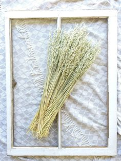 Dried Aveena Oats Green Grains Dry Oats Wheat by greypeonyboutique