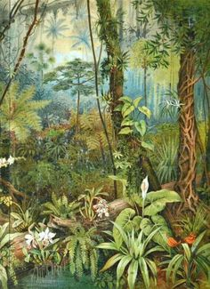 Old book plate Antique illustration. 96 x 117 inches Tropical Forest, Tropical Art, Tropical Plants, Forest Illustration, Antique Illustration, Mural Art, Wall Art, Forest Mural, Illustration Botanique