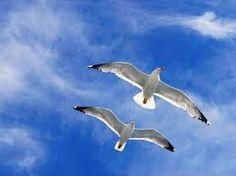 Gabbiani  Non so dove i gabbiani abbiano il nido, ove trovino pace. Io son come loro in perpetuo volo. La vita la sfioro com'essi l'acqua ad acciuffare il cibo. E come forse anch'essi amo la quiete, la gran quiete marina, ma il mio destino è vivere balenando in burrasca.  Vincenzo Cardarelli