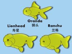 Diff bet. Lionhead, Ranchu and Oranda