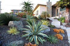 cactees idee amenagement jardin paysager exterieur
