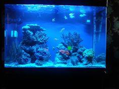 Dave's All Pond Solutions 100cm, 250L cabinet tank in black!    http://www.allpondsolutions.co.uk/cabinet-fish-tank-aquarium-250-litres-100cm-four-colours.html