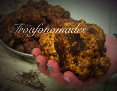 Fresh Truffle Tuber Borchii Vitt by #Troufonomades
