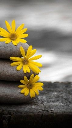 iPhone 7 Case Close-up, Stones, Flowers, Green, Yellow New Live Wallpaper, Iphone Wallpaper Yellow, Live Wallpapers, Hd Wallpaper, Amazing Wallpaper, Desktop Background Pictures, 4k Background, Yellow Flower Wallpaper, Yellow Flowers