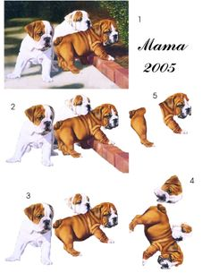Pups 3d Cards, Xmas Cards, Image Stitching, Image 3d, 3d Sheets, Newspaper Crafts, Paper Fans, Decoupage Paper, Pattern Drawing