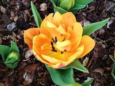 Orange Flower  By Kristine Euler