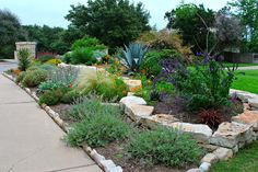 Sometimes you CAN have it all! Here's a mixed front yard that combines beautiful plants and hardscape with a lawn.