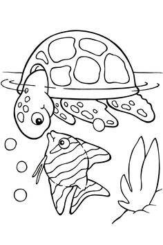 Free Printable Turtle Coloring Pages For Kids   Picture 4 U2013 Printable  Turtles Animal Coloring Pages Kids For Free