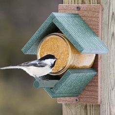 Peanut Butter House Feeder More #birdhouses #birdhousetips