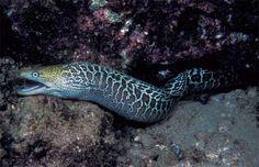 Dangers in the Deep: 10 Scariest Sea Creatures | Sharks, Fish & Jellyfish | Sea Predators
