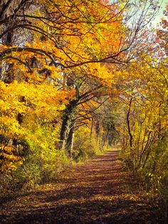 Beautiful forest path in autumn (no location given) by roly-trucker / campieren-reisen-fotografieren 🍂cr. Forest Path, Tree Forest, Tree Photography, Landscape Photography, Beautiful World, Beautiful Places, Beautiful Forest, Tree Tunnel, New England Fall