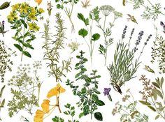 Botanical Wallpaper | Plums for Breakfast: Freebies: Botanical Wallpaper