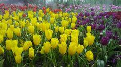งานดอกไม้งาม@เชียงราย
