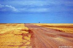 Outback Australia, Queensland Australia, Western Australia, Camping, Australian Plants, Australian Animals, Kakadu National Park, Australian Photography, Australian Continent