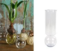 {Bulb Vases - Set of 2} put lilies, irises, or other bulb plants in these unique vases to watch it grow from the bottom up! neat! :)