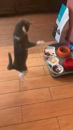 Funny Cute Cats, Cute Funny Animals, Funny Dogs, Cute Dogs, Cute Animal Videos, Funny Animal Pictures, Beautiful Cats, Animals Beautiful, Kittens Cutest