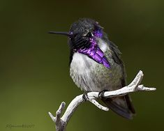 Pretty hummingbird
