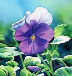pansy watercolor by Barbara Fox