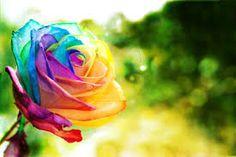 happy birthday flowers rose - Google Search