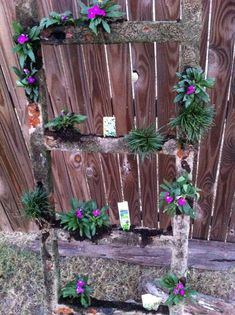 Old Ladder Herb Garden #outdoors #yard #decoration #reuse #upcycle #gardening #plants #flowers