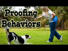 Proofing behaviors your dog knows...  Once your dog knows a behavior start proofing it right away.