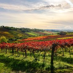 From Lambrusco to Sangiovese to the natural juice of Colli Piacentini, here are five wines of Emilia-Romagna to keep an out for. Fresh Fruit Tart, Vegetable Pie, Candied Fruit, Sweet Wine, Italian Dishes, Cover Photos, Tuscany, Wines, Natural Juice