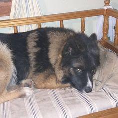 Här väntar Bella på att vi ska fara ut på en morgonpromenad 👣🐕🐶Lite för mörkt än 😀🤗 #bellaväntar #morgonpromenad #alltförmörktän Dogs, Animals, Instagram, Ska, Animales, Animaux, Pet Dogs, Doggies, Animal