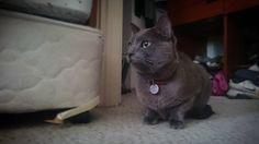 Nueva integrante en la casa estudio #laVengazaDeLaViru #gato #cat @fran_chus