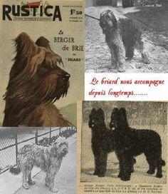 http://www.briard-petiterochette.fr/ba_general_briard.htm