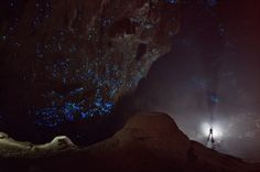 Biologists hypothesize that the larvae of New Zealand glowworm Arachnocampa luminosa – which dangle, numerous and luminous, from the ceilings of caves – have evolved to resemble a star-studded night sky.