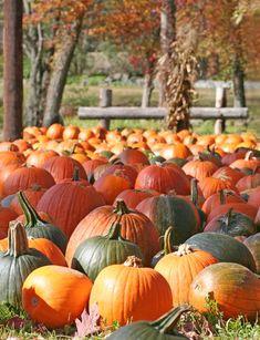 Fun & Free (Or Cheap) Fall & Halloween Activities Fall Pumpkins, Halloween Pumpkins, Fall Halloween, Halloween Ideas, Halloween Activities, Autumn Activities, Family Activities, Adornos Halloween, Pumpkin Farm