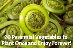 20 Perennial Vegetables to Plant Once and Enjoy Forever!  #gardening