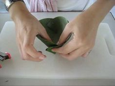Making a Banana Leaf Pouch Tutorial to be used in Thai cooking.