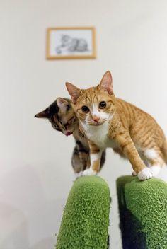 cat by NEKOFighter on Flickr.cats