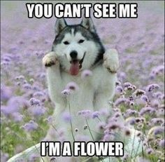 Funny Animal Memes Of The Day – 30 Pics animals Lustige Tiermemes des Tages – 30 Tiere Pics Tiere [. Funny Dog Captions, Funny Animals With Captions, Cute Animal Memes, Funny Animal Quotes, Funny Dog Memes, Animal Jokes, Funny Pictures With Captions, Cute Funny Animals, Picture Captions
