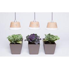 Bulbo CYNARA lampada a led per stimolare la fotosintesi clorofilliana