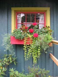 great plants in window box.