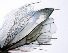 Artist Alan Bur Johnson natural motifs often Butterfly Project, Insect Art, Japanese Aesthetic, Science Art, Art Classroom, Textile Artists, Medium Art, Art Images, New Art