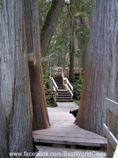 love the boardwalk built amongst the trees! I think I could convince my husband to take a camping trip to Revelstoke. Sunshine Coast, Canadian Travel, Canadian Rockies, The Places Youll Go, Places To See, Revelstoke Bc, Western Canada, Family Road Trips, Staycation