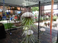 Sea Urchin Sea Urchin, Spring Fever, Winter Garden, Plant Hanger, Bloom, Plants, Plant, Planets, Terraced Garden